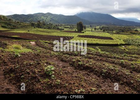 Fertile land is cultivated in the lower slopes of the Virunga Mountain Range in the Volcanoes National Park, Rwanda. - Stock Photo
