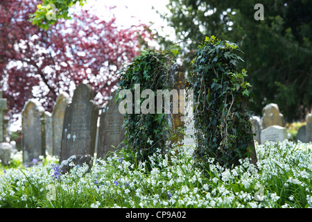 Gravestone covered in ivy in Holy Trinity Churchyard, Buckfastleigh, Devon, England - Stock Photo
