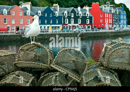 A seagull standing on top of  lobster pots in front of the colourful quayside in Tobermory, Isle of Mull Scotland - Stock Photo