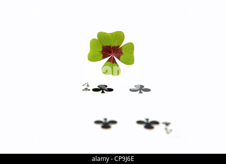 A four leaf clover for good luck - Stock Photo