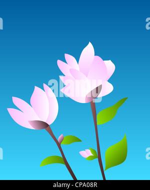 Pink magnolia flowering plant illustration on blue background - Stock Photo