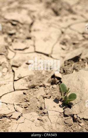 Scarce vegetation in a dried streambed, Tabernas, Spain