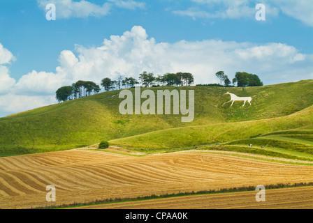 white chalk horse figure at Cherhill  down Wiltshire England UK GB EU Europe - Stock Photo