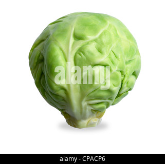 a brussels sprout isolated on a white background with clipping path - Stock Photo