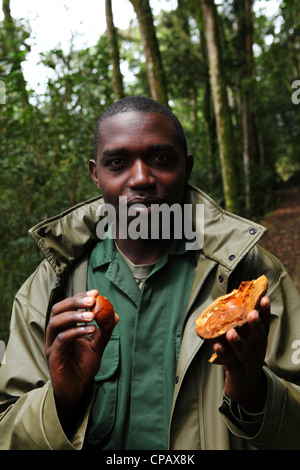 A naturalist and guide at work in Nyungwe National Park, Rwanda. - Stock Photo