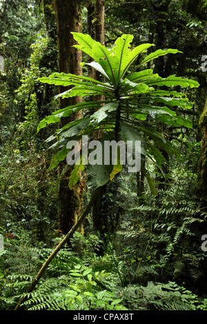 Plant life within the tropical rain forest in Nyungwe National Park, Rwanda. - Stock Photo