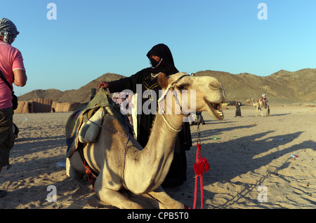 Bedouin woman guide in traditional clothing leads tourists riding camels in desert. Bedouin village about Hurghada - Stock Photo