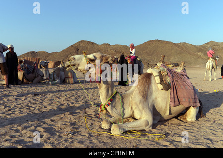 Bedouin guide in traditional clothing leads tourists riding camels in desert. Bedouin village about Hurghada Egypt - Stock Photo