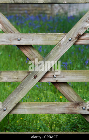 7 bar gate in front of a field full of bluebells. Devon, England - Stock Photo