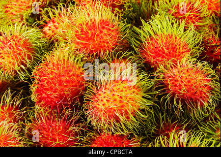 fresh rambutan fruit - Stock Photo