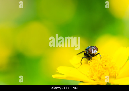 fly macro in green nature or in the city or on food - Stock Photo