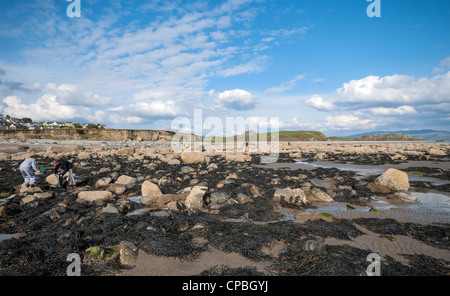Boys rockpooling on Criccieth beach in North Wales, UK - Stock Photo
