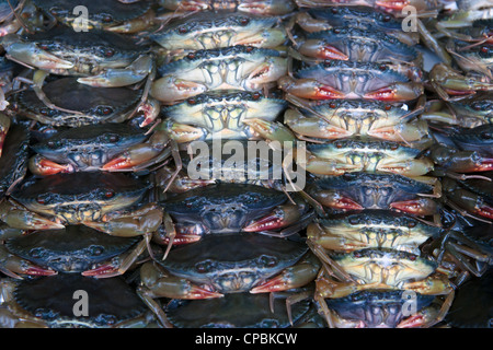 lots of fresh crabs for sale in the market - Stock Photo