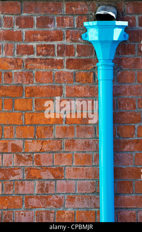 Blue Drainpipe against a red brick wall. England - Stock Photo
