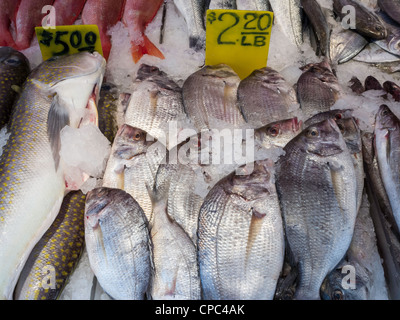Fish Market, Chinatown, NYC - Stock Photo