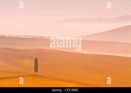 Lone cypress tree on Misty morning Tuscany Val d'orcia San Quirico d'orcia near Pienza Italy EU Europe - Stock Photo