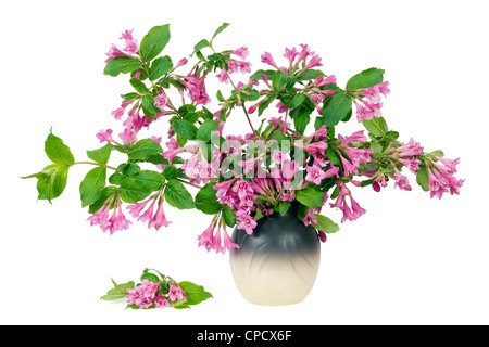 Bush spring branches with pink buds and flowers in jug isolated - Stock Photo