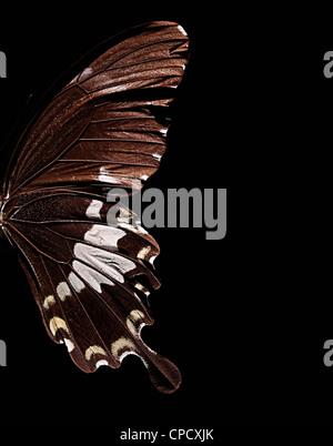 Close up of butterfly wing - Stock Photo