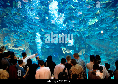 The Dubai Mall Aquarium, Dubai, United Arab Emirates, Middle East - Stock Photo