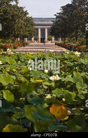 Water lilies in the Jardins Botanique (Botanical Gardens), Tours, Indre et Loire, Centre, France, Europe - Stock Photo