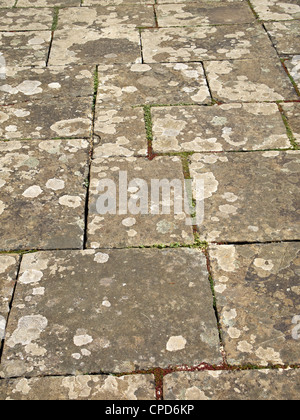 Weathered and worn York stone flagstone path with plants growing between the slabs. - Stock Photo