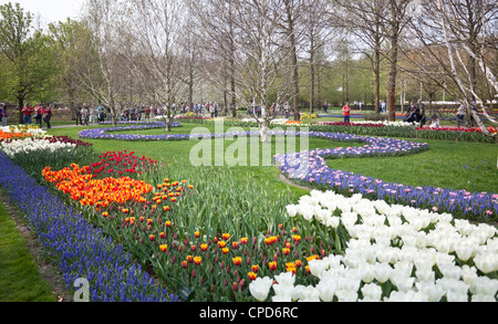 Field of tulips, Keukenhof Gardens, Park Lisse, garden of Europe, The world's largest flower garden, Netherlands - Stock Photo