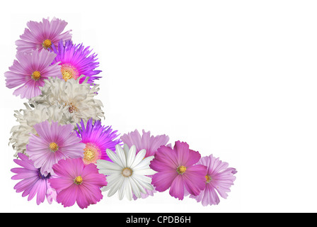 Cutout border of pink and white flowers - Stock Photo