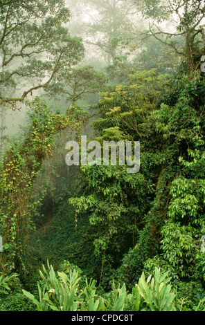 Cloud forest, Monteverde. - Stock Photo