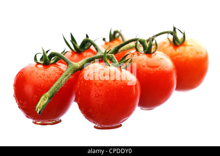Wet Cherry Tomatoes on the vine isolated - Stock Photo
