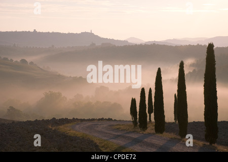 Early morning mist and cypress tress in the Val d'Orcia, UNESCO World Heritage Site, Tuscany, Italy, Europe - Stock Photo
