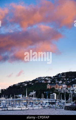 Wellington, North Island, New Zealand, Pacific - Stock Photo