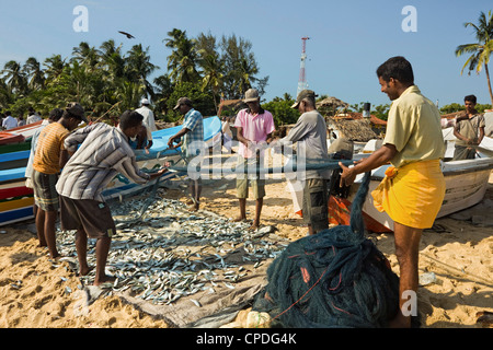 Fishermen with fish in nets on this popular surf beach, badly hit by the 2004 tsunami, Arugam Bay, Eastern Province, - Stock Photo