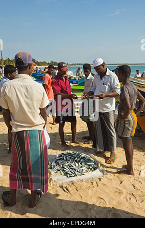 Negotiation over the price of freshly caught fish on this popular busy surf beach, Arugam Bay, Eastern Province, - Stock Photo