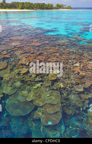 Coral plates, lagoon and tropical island, Maldives, Indian Ocean, Asia - Stock Photo