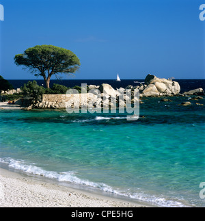 Palombaggia Beach, near Porto Vecchio, South East Corsica, Corsica, France, Mediterranean, Europe - Stock Photo