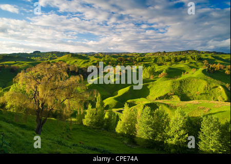 Farmland near Taihape, North Island, New Zealand, Pacific - Stock Photo