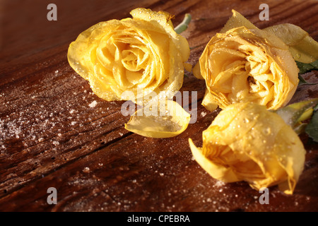 Frozen yellow roses on a rustic wooden table - Stock Photo