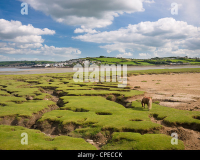 Skern salt flats viewed from Northam Burrows Country Park with Appledore in the distance, Devon, England, United - Stock Photo