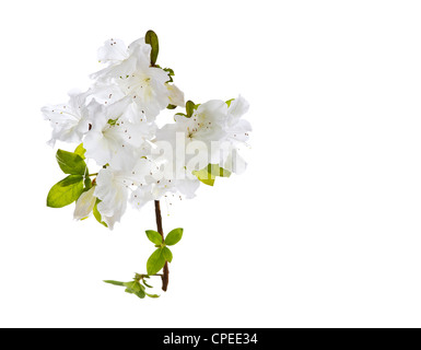 Beautiful wild flowers in full bloom on white background - Stock Photo