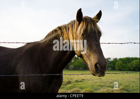Horses grazing in pasture on fringe of the small mountain town of Salida, Colorado, USA - Stock Photo