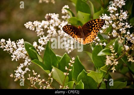 Springtime. - Stock Photo