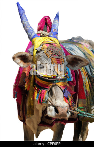 Holy indian cow decorated with colorful cloth and jewelry - Stock Photo