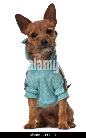 Crossbreed, 1 year old, in jacket sitting against white background - Stock Photo