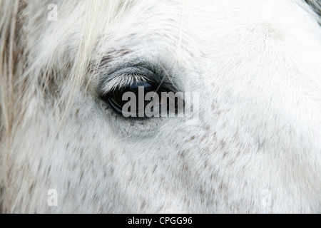 Close-up of white horse face and eye - Stock Photo