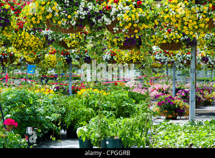 Fresh Spring Flowers And Hanging Plants For Sale At A