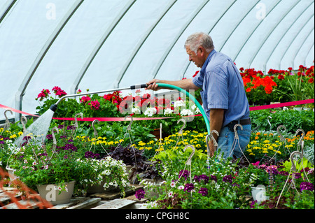 Gardener watering fresh spring flowers for sale at a small town nursery. - Stock Photo
