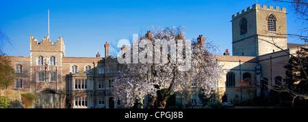 A Cherry Tree in the grounds of Jesus College, University City of Cambridge, Cambridgeshire, England, UK - Stock Photo