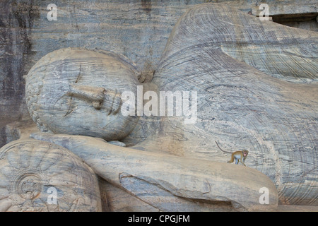 Toque macaque Macaca sinica on Reclining Buddha in Nirvana, Gal Vihara Rock Temple, Polonnaruwa, Sri Lanka, Asia - Stock Photo
