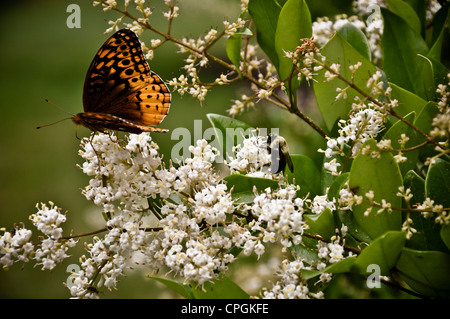 Early spring butterfly on flowers. - Stock Photo