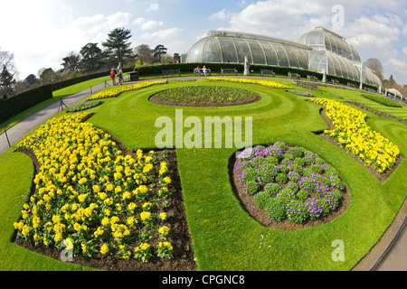 Parterres in spring outside the Palm House, Kew Royal Botanic Gardens, London, England, UK, United Kingdom, GB, - Stock Photo